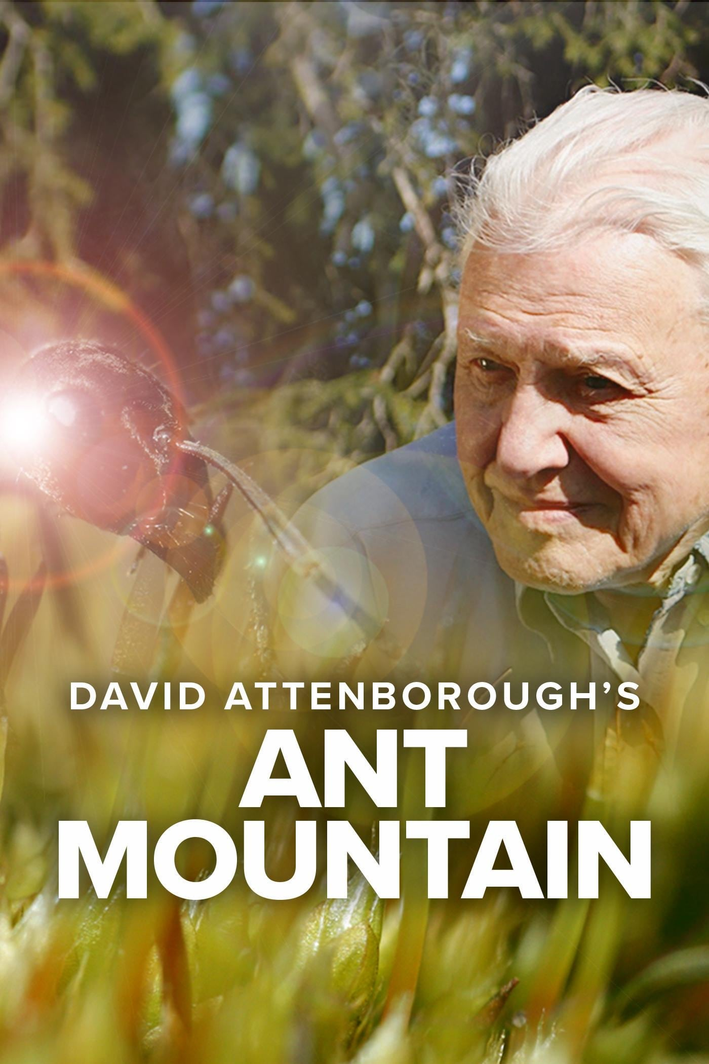 ATTENBOROUGH'S ANT MOUNTAIN